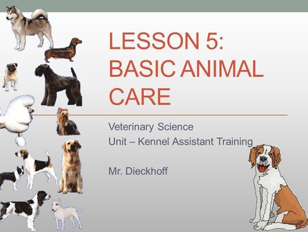 LESSON 5: BASIC ANIMAL CARE Veterinary Science Unit – Kennel Assistant Training Mr. Dieckhoff.