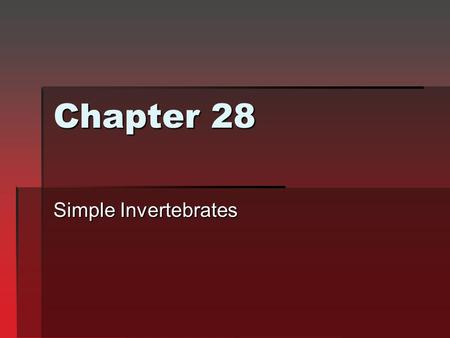Chapter 28 Simple Invertebrates.