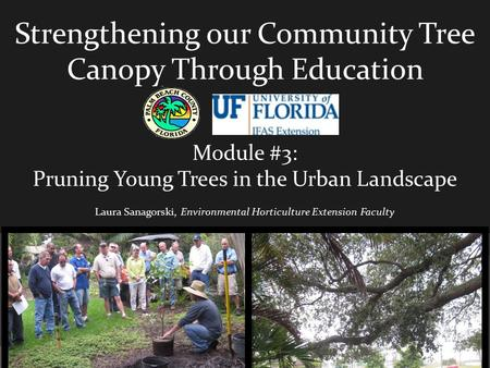 Strengthening our Community Tree Canopy Through Education Module #3: Pruning Young Trees in the Urban Landscape Laura Sanagorski, Environmental Horticulture.