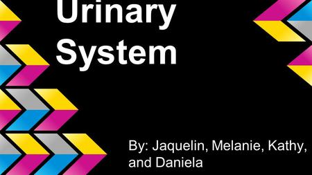 Urinary System By: Jaquelin, Melanie, Kathy, and Daniela.