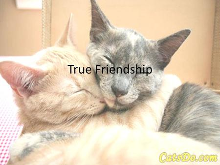 True Friendship. Friendship – the God Way We all have friends, spanning the spectrum of BFF to casual acquaintance The single largest destroyer of friendships.