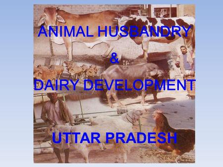 ANIMAL HUSBANDRY & DAIRY DEVELOPMENT UTTAR PRADESH.