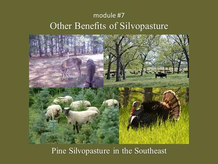 Module #7 Other Benefits of Silvopasture Pine Silvopasture in the Southeast.