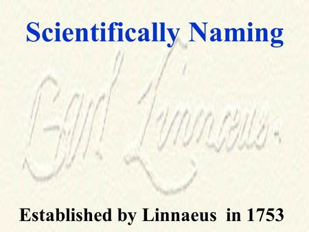 Scientifically Naming Established by Linnaeus in 1753.