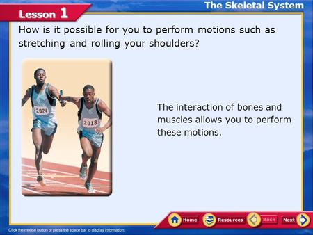Lesson 1 How is it possible for you to perform motions such as stretching and rolling your shoulders? The interaction of bones and muscles allows you.
