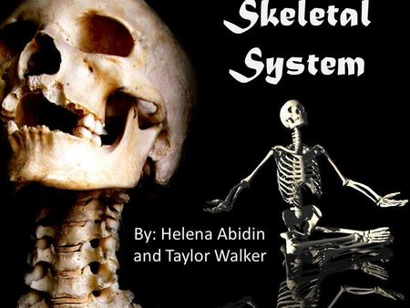 By: Helena Abidin and Taylor Walker Skeletal System.