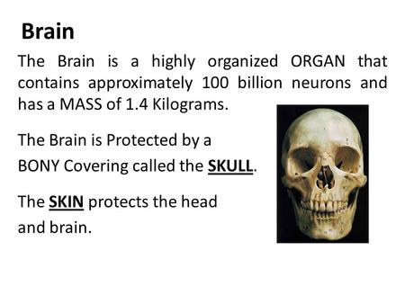 The Brain is a highly organized ORGAN that contains approximately 100 billion neurons and has a MASS of 1.4 Kilograms. The Brain is Protected by a BONY.
