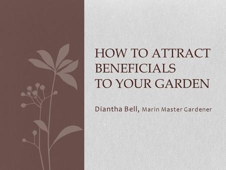 Diantha Bell, Marin Master Gardener HOW TO ATTRACT BENEFICIALS TO YOUR GARDEN.