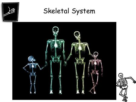 Skeletal System. 4 Functions of the Skeletal System 1. Supports the body. The backbone is the main support center for the upper body. It holds your head.