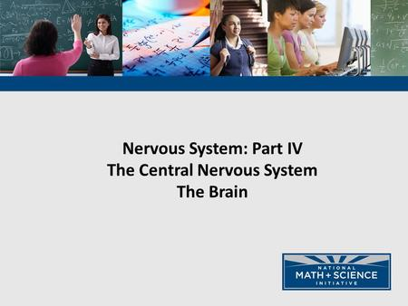 Nervous System: Part IV The Central Nervous System The Brain.
