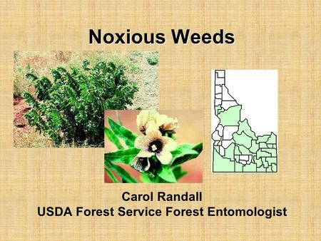 Noxious Weeds Carol Randall USDA Forest Service Forest Entomologist.