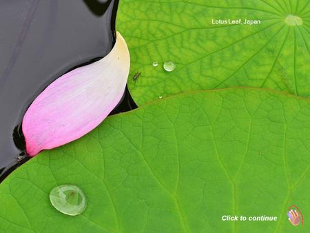 Lotus Leaf, Japan Click to continue Kali Gandaki River, Nepal.