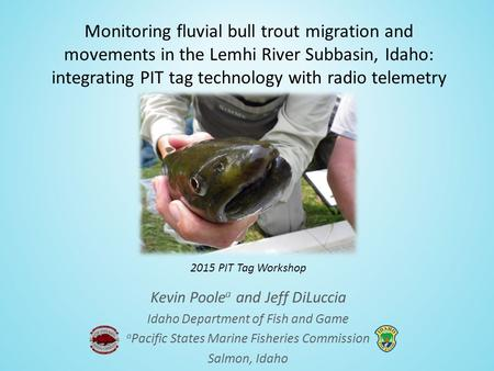 Monitoring fluvial bull trout migration and movements in the Lemhi River Subbasin, Idaho: integrating PIT tag technology with radio telemetry Kevin Poole.