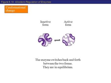 Conformational change The enzyme switches back and forth between the two forms. They are in equilibrium. Inactive form Active form Figure 6.19 Allosteric.