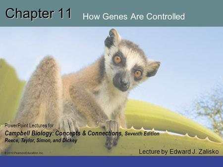 Chapter 11 How Genes Are Controlled