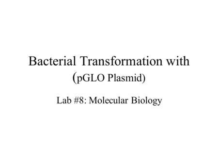 Bacterial Transformation with ( pGLO Plasmid) Lab #8: Molecular Biology.
