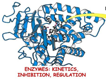 ENZYMES: KINETICS, INHIBITION, REGULATION