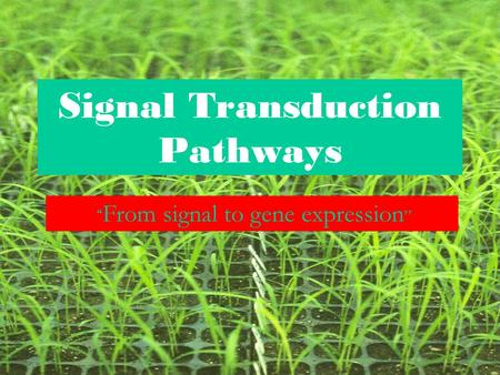 "Signal Transduction Pathways "" From signal to gene expression """