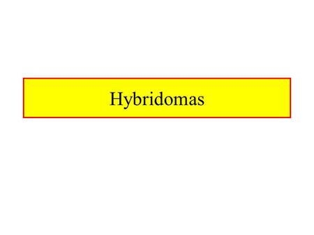 Hybridomas. Hybrid Cell Lines Normal Cells Are Fused With A Cancerous Cell Line –E.x myeloma, lymphoma Fusion Is Accomplished With PEG (polyethylene.