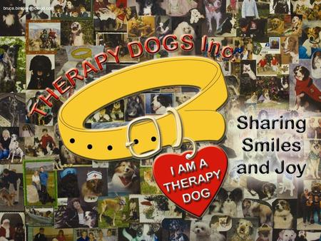 2 Therapy Dogs Inc. Presentation 2015 © We hope this will be a helpful tool to make your visits safe and fun for both you and.