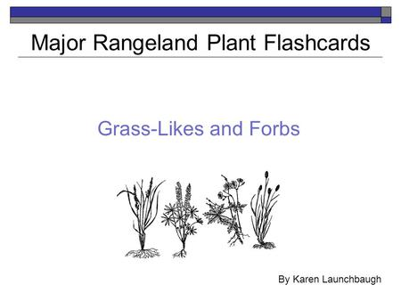 Major Rangeland Plant Flashcards