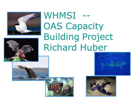 WHMSI -- OAS Capacity Building Project Richard Huber.