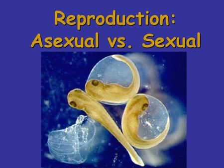 Reproduction: Asexual vs. Sexual