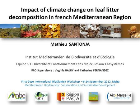 Impact of climate change on leaf litter decomposition in french Mediterranean Region Mathieu SANTONJA Institut Méditerranéen de Biodiversité et d'Ecologie.