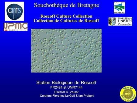 Souchothèque de Bretagne Roscoff Culture Collection Collection de Cultures de Roscoff Station Biologique de Roscoff FR2424 et UMR7144 Director D. Vaulot.