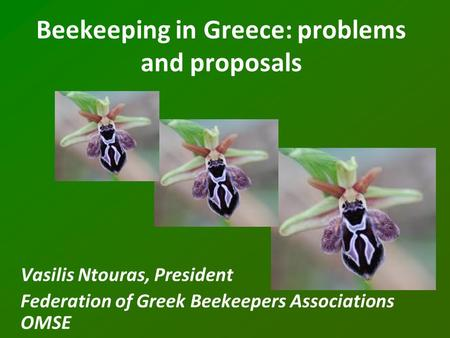 Beekeeping in Greece: problems and proposals Vasilis Ntouras, President Federation of Greek Beekeepers Associations OMSE.