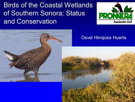 Birds of the Coastal Wetlands of Southern Sonora: Status and Conservation Osvel Hinojosa Huerta.
