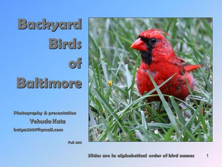 1 Backyard Birds ofBaltimore Photography & presentation Yehuda Katz Fall 2011 Slides are in alphabetical order of bird names.