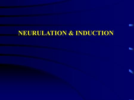 NEURULATION & INDUCTION. Neural plate stage