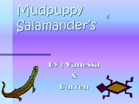 Mudpuppy Salamander's By : Vanessa &Darren Table Of Contents Slide 1 –Title Page Slide 2 – Table Of Contents Slide 3 – Introduction Slide 4 – Habitat.
