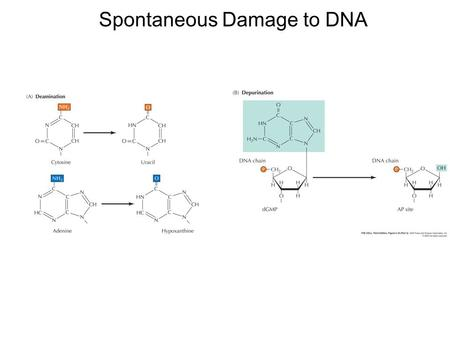 Spontaneous Damage to DNA. Examples of DNA Damage Induced by Radiation and Chemicals.