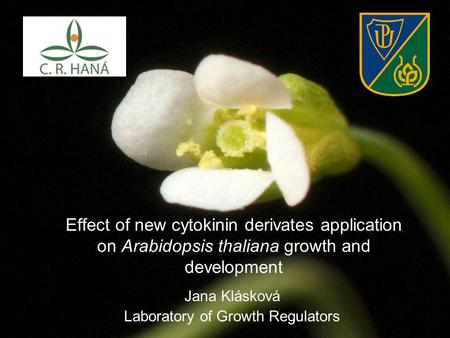 Effect of new cytokinin derivates application on Arabidopsis thaliana growth and development Jana Klásková Laboratory of Growth Regulators.
