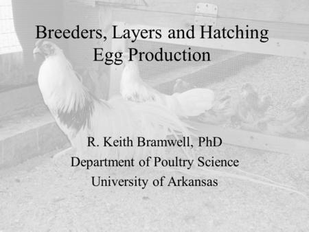 Breeders, Layers and Hatching Egg Production R. Keith Bramwell, PhD Department of Poultry Science University of Arkansas.