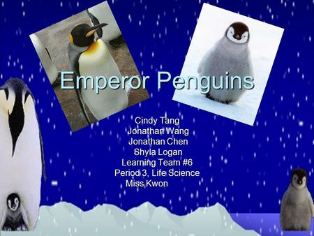 Emperor Penguins Cindy Tang Jonathan Wang Jonathan Wang Jonathan Chen Jonathan Chen Shyla Logan Shyla Logan Learning Team #6 Period 3, Life Science Miss.