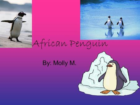 African Penguin By: Molly M.. Physical Characteristics The African Penguin has shiny, waterproof feathers. There are about 70 feathers per square inch.