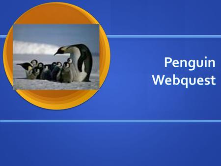 Penguin Webquest. Introduction Congratulations! Bundle up in layers of warm clothes because you are going to Antarctica! You have been selected to work.