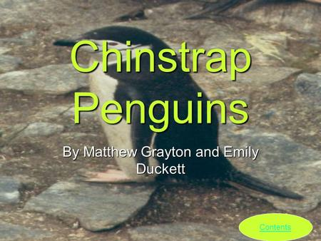 Chinstrap Penguins By Matthew Grayton and Emily Duckett Contents.