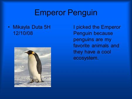 Emperor Penguin Mikayla Duta 5H 12/10/08 I picked the Emperor Penguin because penguins are my favorite animals and they have a cool ecosystem.