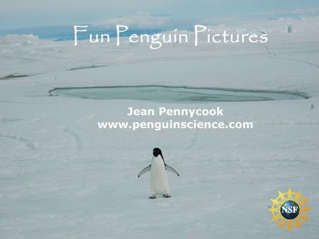 Jean Pennycook www.penguinscience.com Fun Penguin Pictures.