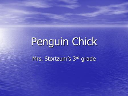 Penguin Chick Mrs. Stortzum's 3 rd grade. Get warm and cozy. snuggle snuggle.