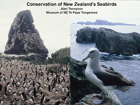 Conservation of New Zealand's Seabirds Alan Tennyson Museum of NZ Te Papa Tongarewa.