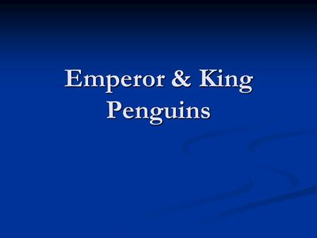 Emperor & King Penguins. The ancestors of Adélie and Emperor penguins lived in areas of temperate climate (like California is now). When Adelie (and Emperor)