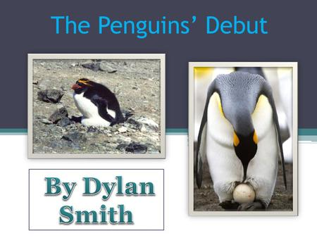 The Penguins' Debut. Waddle, waddle. Slip and slide. Dive down deep. Catch some fish and swim away happy. Aahh! The life of a penguin. Let's explore the.