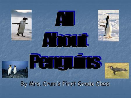 By Mrs. Crum's First Grade Class Table of Contents What Penguins Look Like………….………3 What Penguins Look Like………….………3 Where Penguins Live………………….……..6.