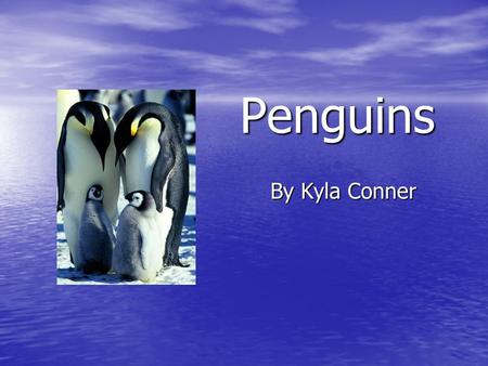 Penguins By Kyla Conner. Objectives You will identify the life cycle of a penguin. You will identify the life cycle of a penguin. You will be able to.