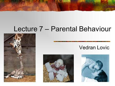 Lecture 7 – Parental Behaviour Vedran Lovic Term Test 1 Vedran's office hours: Thursday, Nov. 4 (10-12) and Tuesday, Nov. 9 (2-3).